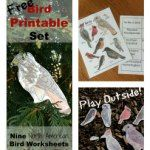 Free Bird Printable Set of Hunting Red Nature Study, Outdoor Play, Name Cards, Homeschool, Hunting, Mud Kitchen, Printables, Bird, Worksheets