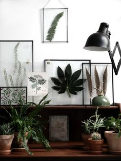 "niftyncrafty: ""DIY Transparent Frames with Pressed Leaves // Froken Overspringhandlings This looks amazing! Like seriously this combines but love of plants and not being able to keep them alive successfully. Because their beauty will remain in the. Decor, Gallery Wall, Frame, Home, Interior, Pressed Leaves, Framed Leaves, Interior And Exterior, Home Decor"
