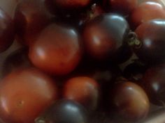 Indigo Rose (Saladette) Tomatoes.  Meaty, less squishy and great for salsa!  The dark pigment is full of antioxidants.