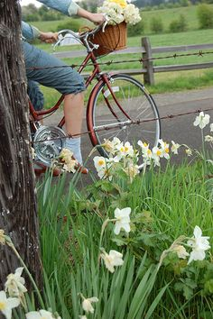Amber's new bicycle! Daffodils, be sure to plant them in the fall.