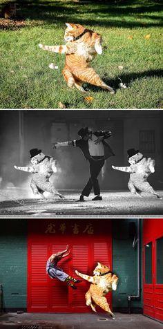 Redditors Reimagine Photo of a Flexible Cat in Hilarious Photoshop Battle e42f78715