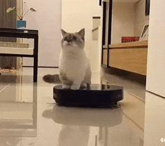 It's my throne