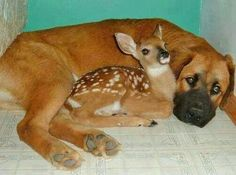 These adorable baby animal pictures are guaranteed to put a smile on your face. Cute cat photos, wonderful dog images and other cute baby animals. Cute Baby Animals, Animals And Pets, Funny Animals, Unusual Animals, Animals Beautiful, Unusual Animal Friendships, I Love Dogs, Cute Dogs, Unlikely Friends