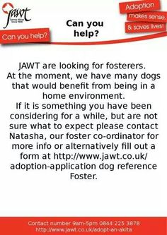 Rescue Fosterers Needed Japanese Akita, Can You Help, The Fosters, Trust, In This Moment, Life