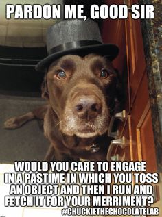 Dogs labrador funny pets Ideas for 2019 Funny Animal Pictures, Funny Photos, Funny Animals, Cute Animals, Lab Puppies, Cute Puppies, Cute Dogs, Funny Dog Memes, Funny Dogs