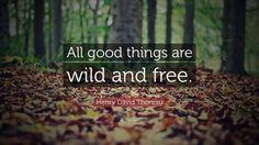 """All things..."" - Henry David Thoreau, Walden [808x454] (reading @ /r/nonfictionbookclub)"