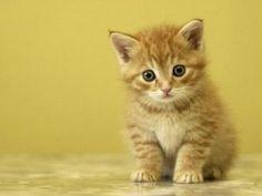 Mi ancantador gatito
