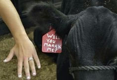 Cute country proposal