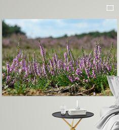 Bloeiende heide in detail van bloempje tot knop in de dop. Met op de achtergrond de Wezepsche Heide. Op een zonnnige dag in augustus. Canvas, Plants, Tela, Canvases, Plant, Planets