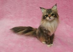 These are AMAZING!!  I really, really wish I could afford one that looked like my kitty....Needle Felted Maine Coon : Miniature Wool Cat