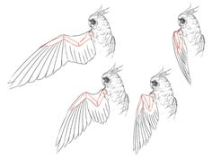 Bird wing tutorials