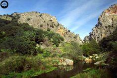 LAS VILLUERCAS. Está situada entre el río Tajo y Guadiana en el sureste cacereño. Tiene una zona agreste de alta montaña, con bosques caducifolios bien conservados de castañares, rebollares y robledales. A media altitud se dan alcornocales y en las dehesas vegetan las encinas. Fauna: ciervo, jabalí, ganado bovino y lince ibérico.
