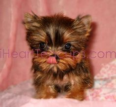iheartteacups - https://www.xing.com/topics/en/iheartteacups-review-pay-attention-to-these-when-getting-a-tea-cup-puppy-34996  https://www.xing.com/topics/en/iheartteacups-reviews-and-the-reasons-of-their-popularity-34997  https://www.xing.com/topics/en/iheartteacups-review-things-to-be-aware-of-when-buying-a-teacup-puppy-34998  https://www.xing.com/topics/en/iheartteacups-review-teacup-puppies-and-potty-training-34999  http://www.clipmoon.com/user/iheartteacups/