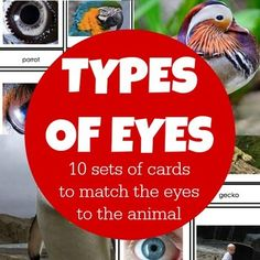 This activity is fun for children. Perfect for a study of the five senses or the human body, this life sciences activity will get your children hooked on wanting to learn more!The set includes 20 cards, 10 pairs, of real images to bring into the home or classroom.