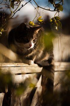 cats, cat, kitten, kitty, fence, wooden, wood, tree, bush, twigs, bokeh, stare, animal, pet, photography