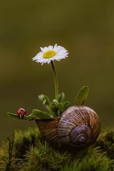 Schnecke Schleifaquarell All About Riding Lawn Mowers Most riding lawn mowers are machines fun to ri Wallpaper Nature Flowers, Flower Background Wallpaper, Flower Phone Wallpaper, Flower Backgrounds, Belle Tof, Purple Flowers, Beautiful Flowers, Miniature Photography, Daisy Love