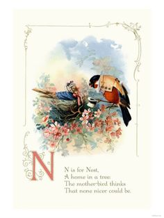 N is for Nest, A home in a tree. The mother-bird thinks That none nicer could be.