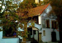 Budapest Bug Hungary, Budapest, Bugs, Cabin, House Styles, Plants, Home Decor, Room Decor, Flora