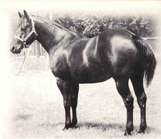 Poco Bueno - He and his sire, King P-234 are one of the cutting industry's most famous father/son teams!