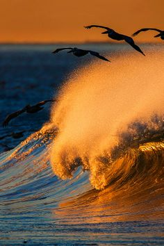 Ocean waves sunset and seagulls Photo: David Orias. Sea And Ocean, Ocean Beach, Ocean Waves, Beach Waves, No Wave, All Nature, Amazing Nature, Surf Mar, Foto Poster
