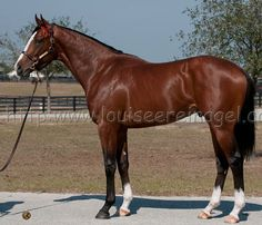 Union Rags is one of the most beautiful thoroughbreds I have ever seen! He is definitely my 2012 Kentucky Derby pick!