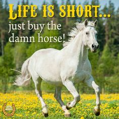 Horse Puns, All About Horses, Horse Quotes, Country Quotes, Animal Memes, Beautiful Pictures, Quotable Quotes, Funny, Butterfly
