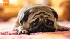 Os animais também podem desenvolver doenças psicológicas. https://www.facebook.com/photo.php?fbid=491228180996724&set=a.236610583125153.51183.221933667926178&type=1&theater