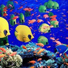 4. La Grande Barriera Corallina, Australia