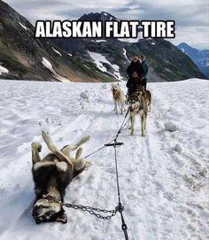 Funny Pets!