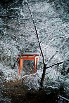 Torii on a snowy Forest in mountain, Koya-san, Japan Trekking, Places To Travel, Places To Visit, Winter In Japan, Tokyo, Japanese Temple, Snowy Forest, Natural Park, Travel Channel