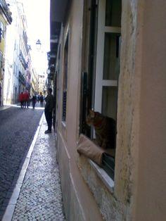 La curiosità del gatto