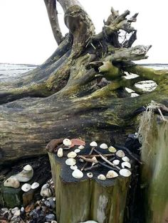 Altar by the Sea