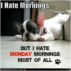I Hate Mornings... But I Hate Monday Mornings Most Of All.