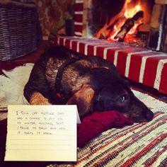 My guess is he learned nothing. 😂 #dogshaming #huntingdog #huntinwabbits #metsästyskoira #pallitjäässä #mäyräkoira #dachshund