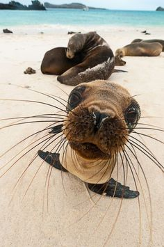 ...love the whiskers:):)...