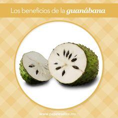 La guanábana es una fruta tropical que contiene vitamina C, además de tener muchos beneficios para la salud:   -Ayuda a prevenir la osteoporosis  -Aumenta la energía  -Contribuye a mejorar el sistema inmunológico   #EliteMeAcompaña