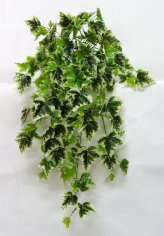 2x Cespuglio Artificiale Edera Ivy - Variegata - 180 Foglie Verdevip http://www.amazon.it/dp/B00CO2R0UA/ref=cm_sw_r_pi_dp_uONPwb1E9CWVR