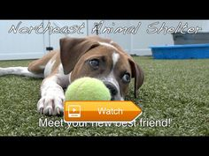 Meet New Friends Cute Rescue Doggos and Rescue Puppers At Northeast Animal Shelter June  This week at Northeast Animal Shelter some wonderful dogs were filmed for their adoption videos They are cute rescue doggos and rescue puppers You will  on Pet Lovers