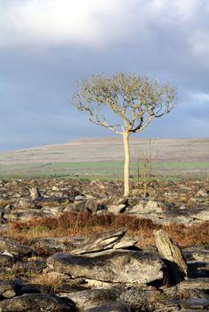 The Burren.  County Clare, Ireland.
