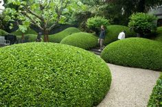 Beautiful Modern Japanese Garden Landscape Ideas – Decorating Ideas - Home Decor Ideas and Tips Garden Hedges, Topiary Garden, Garden Landscaping, Modern Japanese Garden, Japanese Garden Landscape, Formal Gardens, Outdoor Gardens, Landscape Architecture, Landscape Design