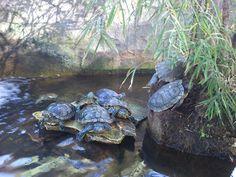 Pet animal - turtle