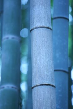 Bamboo - maybe too blue??