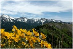 Spring time utah county - Google Search