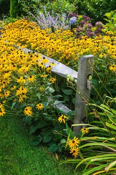 garden fence Beautiful rustic aged split rail fence with narrowing rails running through a lovely garden rife with Black Eyed Susans and Lavender. Fence Landscaping, Rustic Garden Decor, Rustic Fence, Split Rail Fence, Fence, Backyard Fences, Urban Garden, Rustic Landscaping, Rustic Gardens