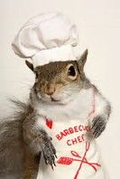 Image result for Dressed Up Squirrels