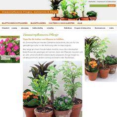 Epic rosmarin Garten vermehren Cutting planting growing harvesting Pinterest
