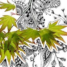 Chinese Maple leaf by LeashR, via Flickr