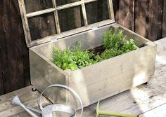 Hennot yrtit kaipaavat suojaa hallaöiltä. Katso Viherpihan ohjeet ja nikkaroi puinen yrttilaatikko helposti ja edullisesti. Hydroponic Plants, Hydroponics, Garden Compost, Gardening, Raised Garden Beds, Dream Garden, Garden Projects, Garden Ideas, Home Deco