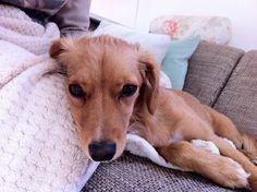 Sopa Hund Dog <3