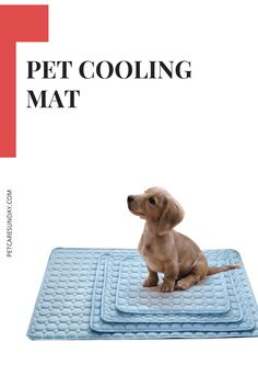 Pet Cooling Mat for dogs can help your dog relax on hot days or after an enjoyable play session with others. It can provide a fun spot for dogs to lie down while you hang out at the backyard, by the pool, with the whole family. #coolingmatfordogs #coolingmattresstopper #coolingmattresspad #coolingmatfordogsdiy #coolingmat Pet Cooling Mat, Dog Leg, Best Mattress, Dogs Golden Retriever, Mesh Material, Hot Days, Folded Up, Happy Dogs, Large Dogs